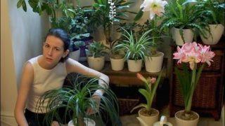 Как правильно расставить цветы в квартире?